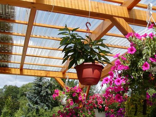 Растения для перголы