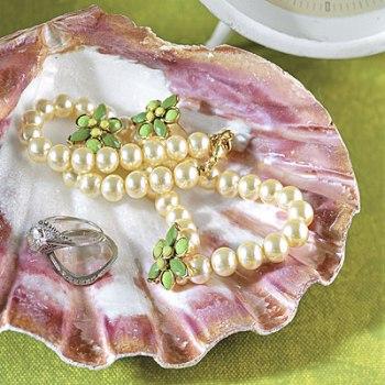 Морские ракушки фото
