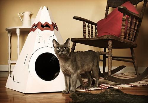 Домики для кошек фото