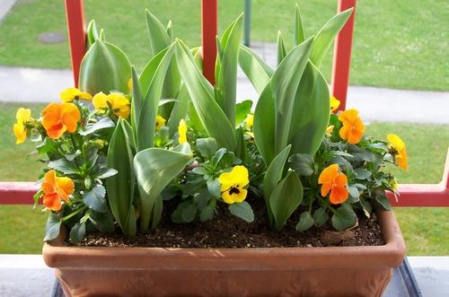 Контейнер для цветов на балконе