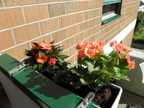 фото балконных цветов