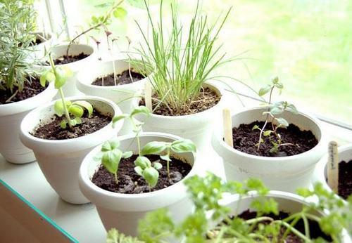 Выращивание цветов на подоконнике