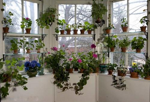 Цветы на окнах фото