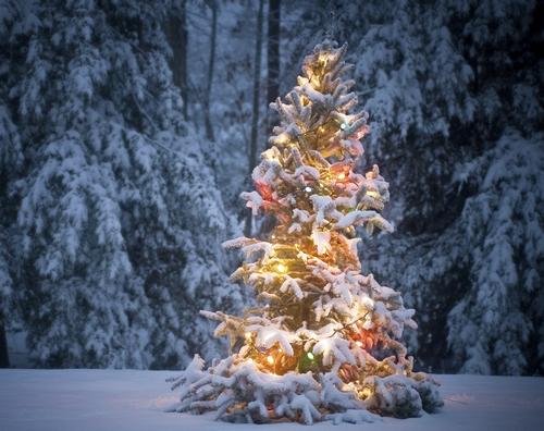 Как украсить елку на улице