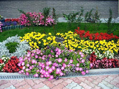 Красивые цветы на клумбе