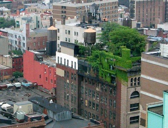 Зеленые насаждения на крыше здания