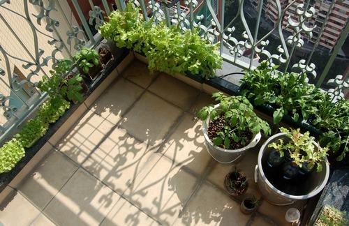 Огород на балконе фото