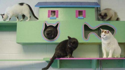 Полноценный домик для кошек
