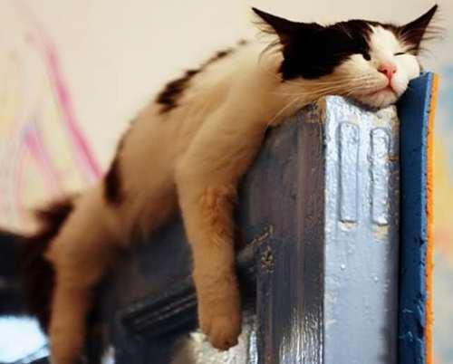 Кошка в квартире фото