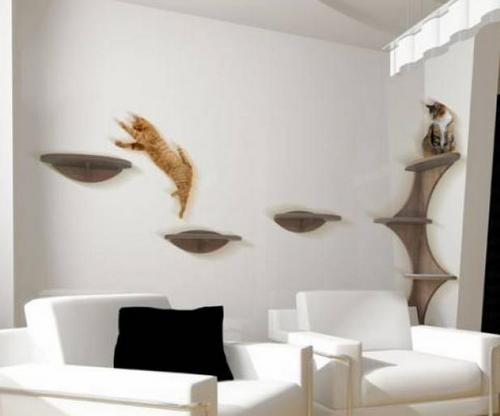 Приспособления для кошек в квартире