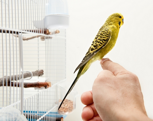 Попугай в квартире фото