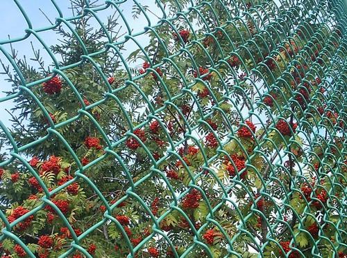 Чем закрыть забор из сетки рабицы