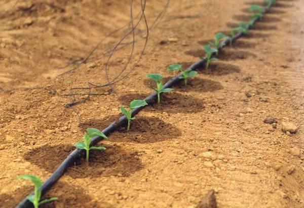 Капельное орошение растений