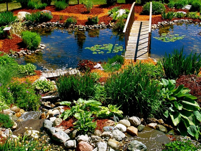 Растения для декоративного пруда