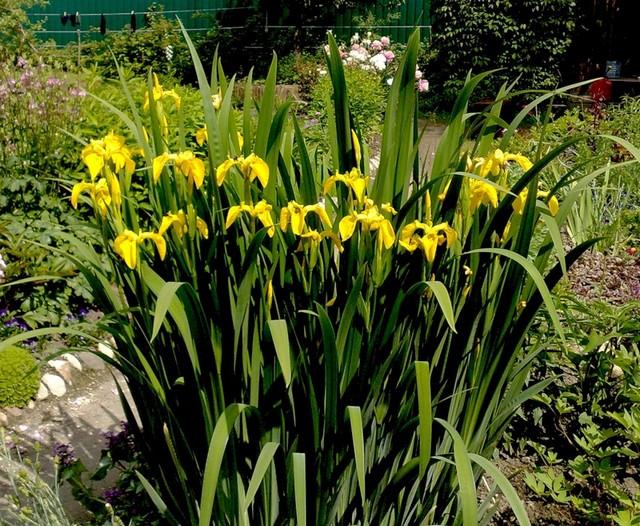 Красивые растения для декоративного пруда