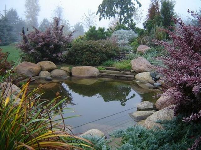 Красивые растения для пруда