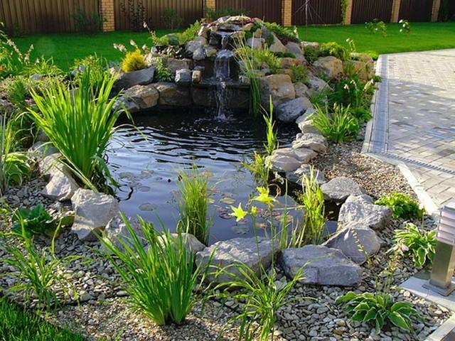 Плавающие растения для пруда фото
