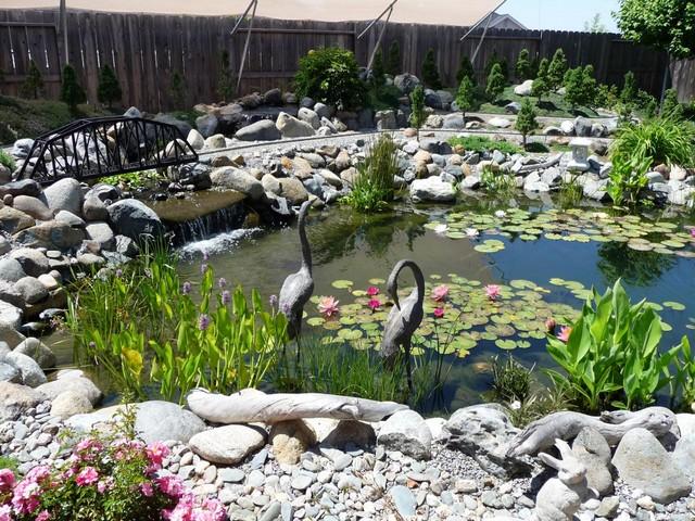 растения для оформления пруда