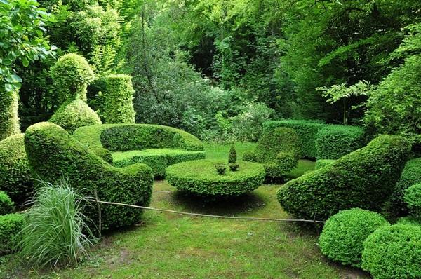 Декоративные кустарники топиари