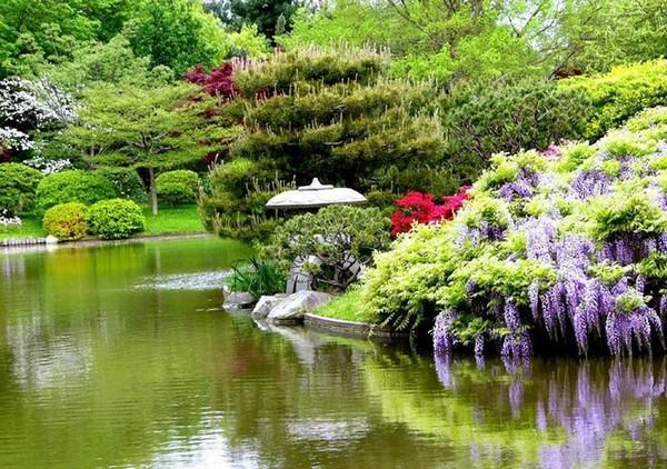 Красивые декоративные деревья и кустарники для сада