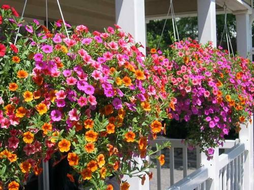 Подвесные корзины с цветами уличные фото