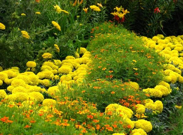 Рабатка желто-зеленая