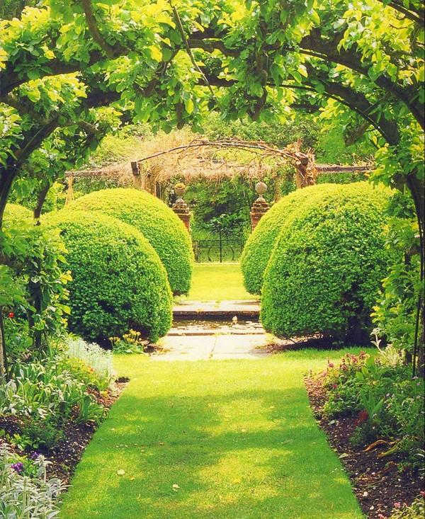 Растения для арок фото