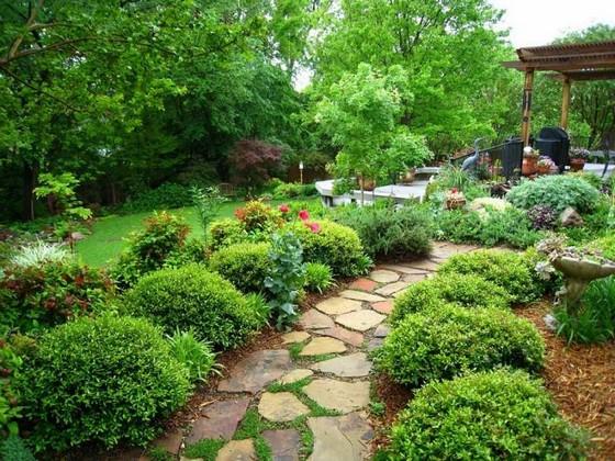вечнозеленые растения фото