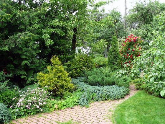 вечнозеленые растения для сада фото