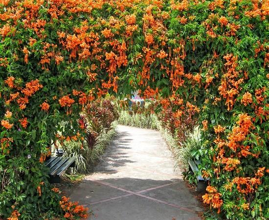арка из цветов