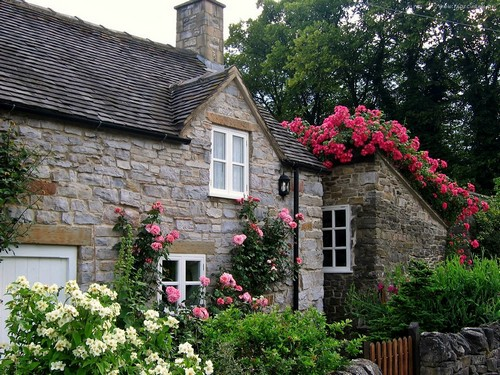 Многолетние цветущие лианы для сада - плетистая роза