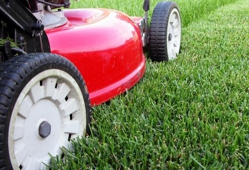 Как стричь газон осенью