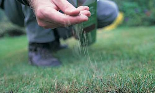 Подсев газона осенью
