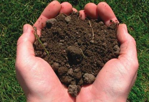 Как проверить кислотность почвы