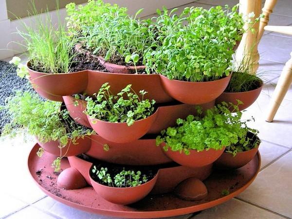 Контейнер для выращивания зелени на подоконнике и балконе