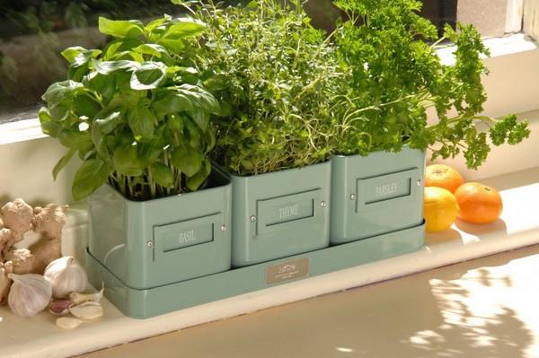Зелень в домашних условиях на подоконнике