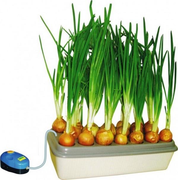 Специальный контейнер для выращивания зеленого лука