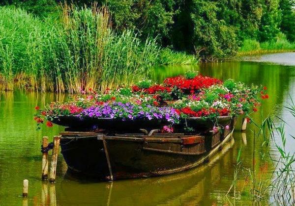 Идеи для клумбы в лодке