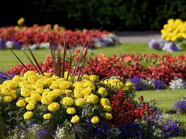 клумба непрерывного цветения фото