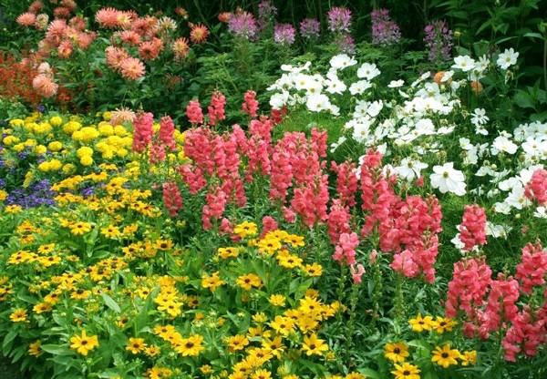 цветник непрерывного цветения из многолетников