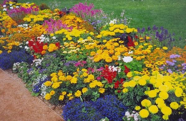 Миксбордер непрерывного цветения фото