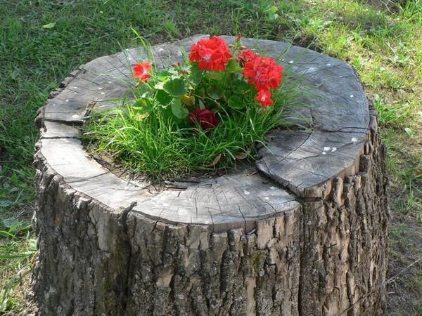 цветы на пне фото