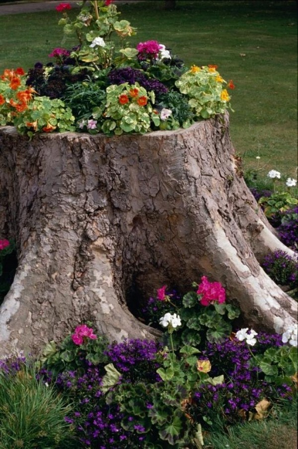 Оригинальные клумбы для цветов на пнях фото