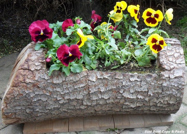 Клумба в бревне с цветущими цветами