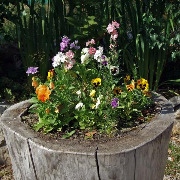 Как посадить цветы в пне