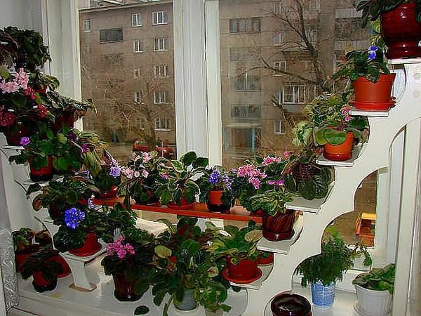 стеллажи на окно для цветов