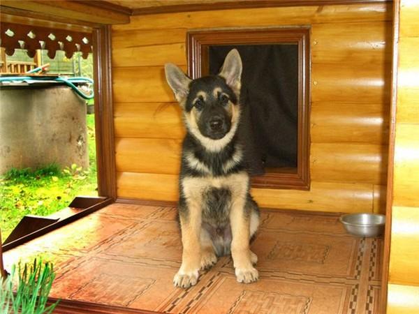 Дом для собаки своими руками фото 7