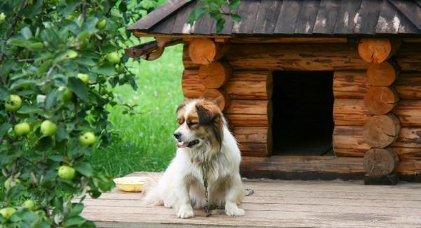 Красивые будки для собак из дерева фото