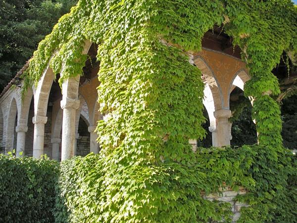 Девичий виноград для украшения архитектурных строений