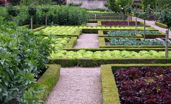 Декоративный огород на участке фото